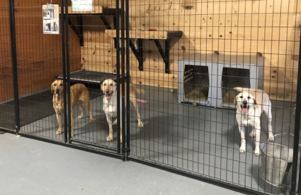 dog boarding facility Winona MN